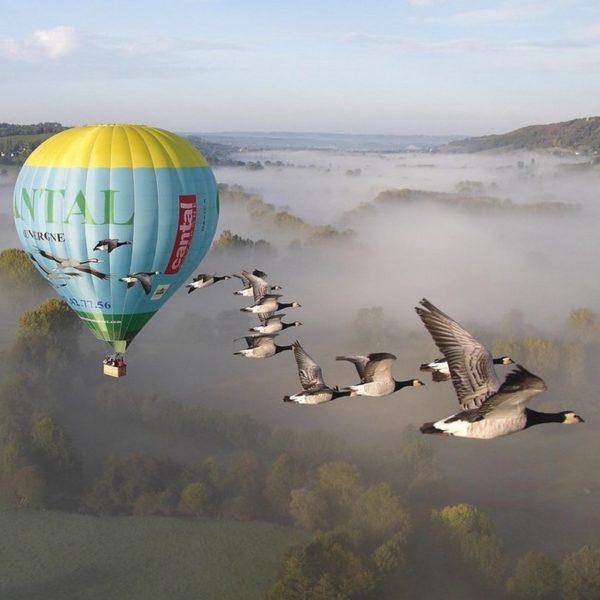 Fly hot air ballon bird Auvergne