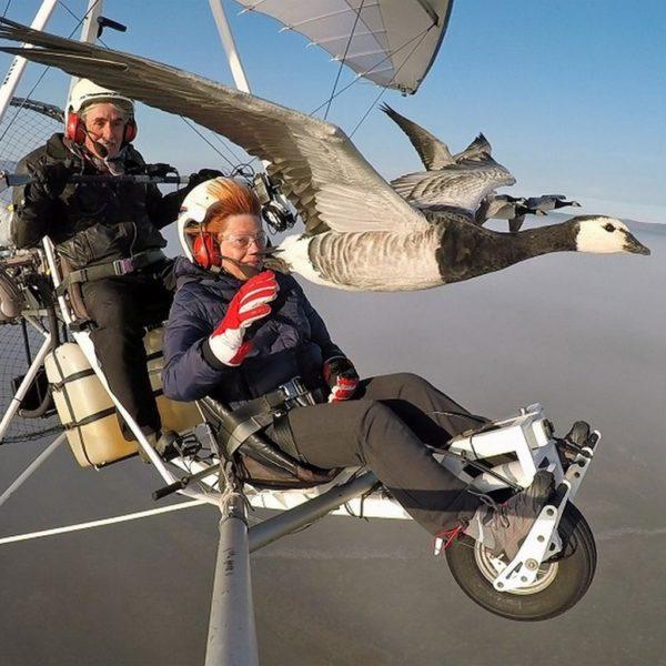 Fly with bird Auvergne