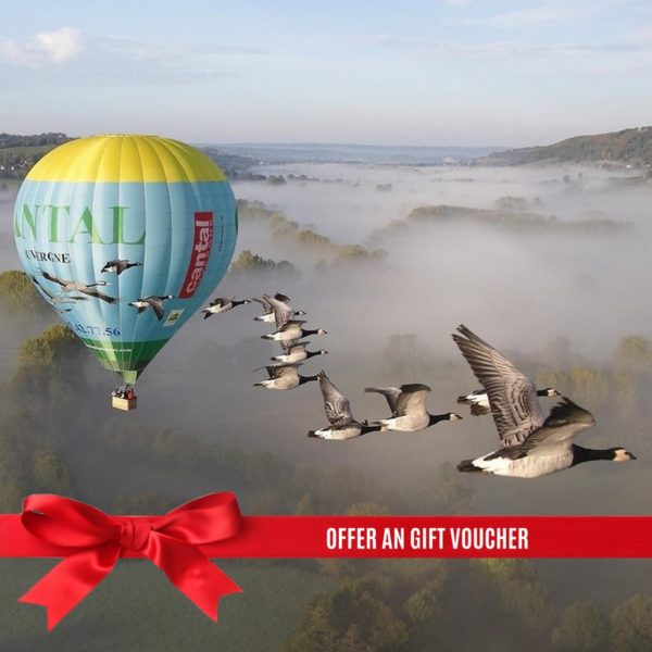 gift ho air balloon fly with bird