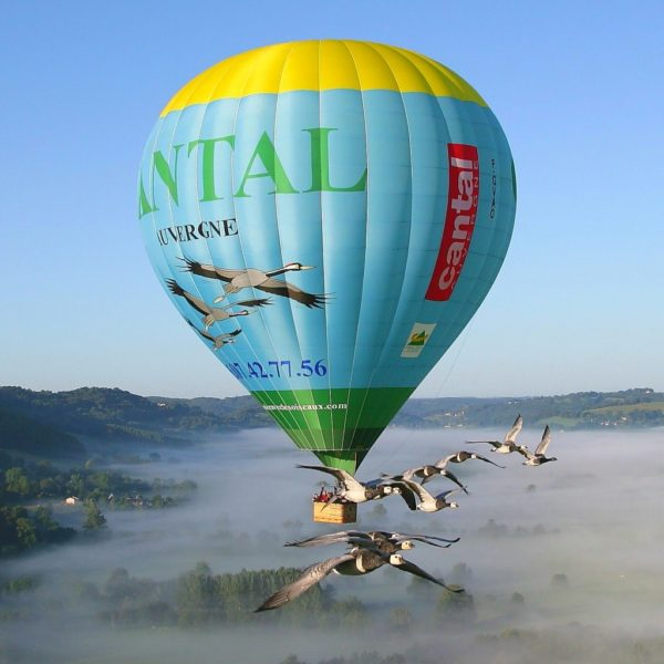Hot air balloon fly with bird